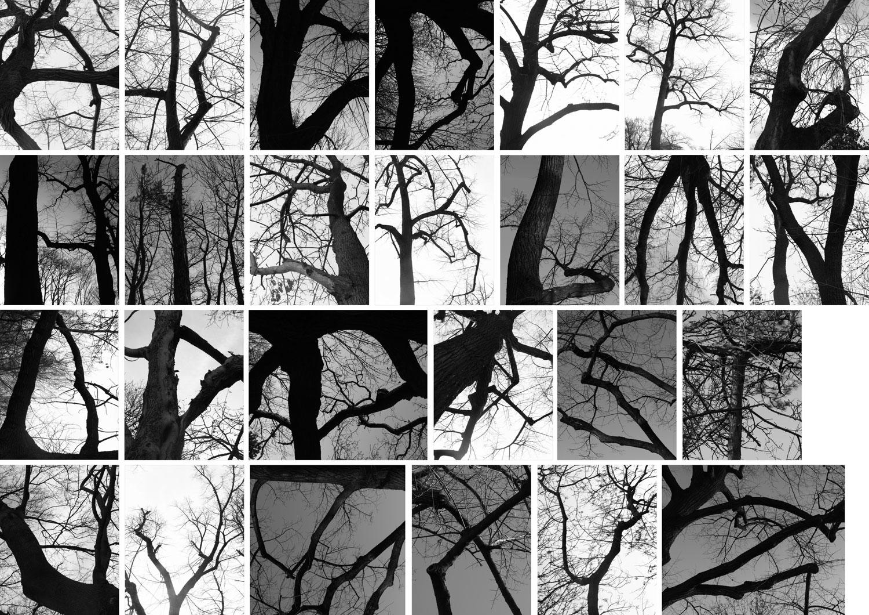 treepographie-web.jpg
