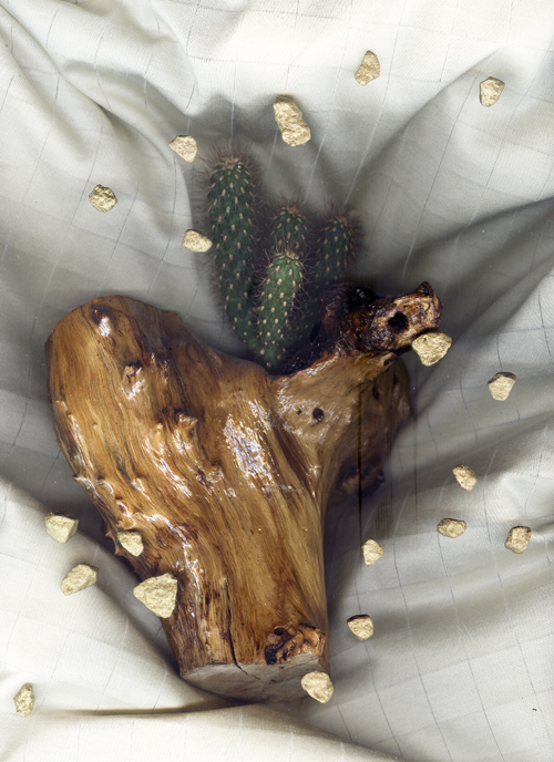 cactus-post.jpg